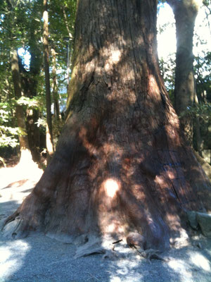 立派な木が沢山。
