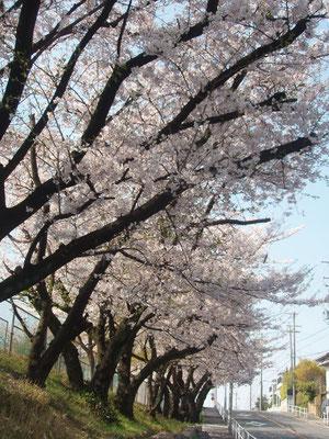 日本一時帰国から戻ってまいりました。続きを読むをクリック