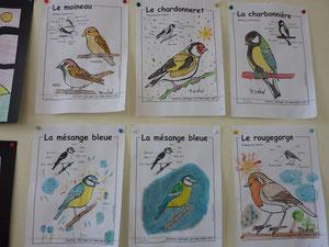 Superbes oiseaux
