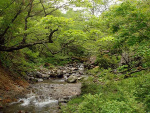 新緑が美しい谷でした