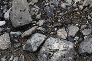 カワラバッタ  本当に忍者のように河原に溶け込みます