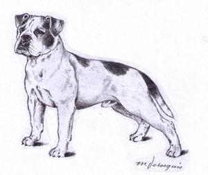 Continental Bulldog Standard Zeichnung