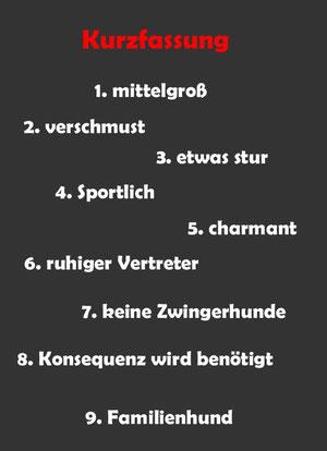 Continental Bulldog Welpen vom Züchter, Berlin, Brandenburg, Sachsen, Sachsen Anhalt, Thüringen, Mecklenburg