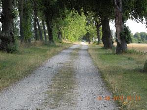 Lindenallee, alter Baumbestand