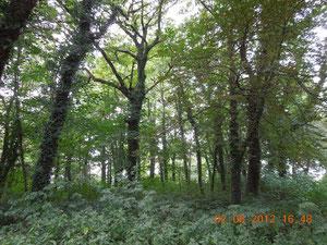 Der Park von Baumersroda