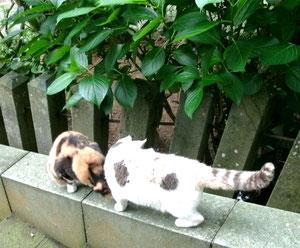 そして猫ね(=^・^=)