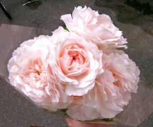 これがオマケの薔薇ねw