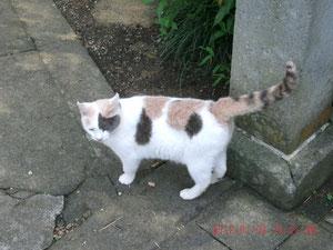 これが猫ちゃん、柄がキュートね♡