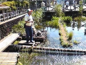 三島梅花藻(ばいかも)の養殖についての説明。快晴で気持ちいい^^
