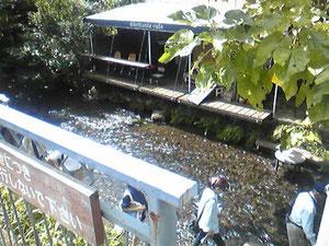 源兵衛川に面した喫茶店。