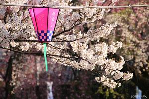 関西のお花見の名所はコチラ