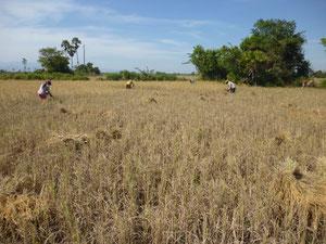 カンボジア農村部の風景
