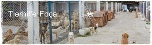 Nilgün Karsilayan, Foca, Yenifoca, Izmir, Türkei - Tierschutz, Streunerhilfe Izmir, Strassenhunde Türkei,