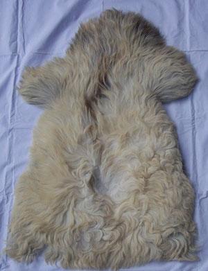 Das Fell eines Hochlandschafes