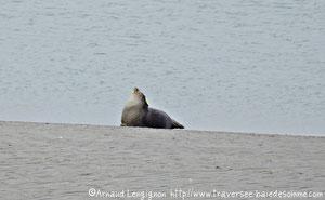 Pensez à réserver votre balade nature pour découvrir les phoques en Baie de Somme©Découvrons la Baie de Somme