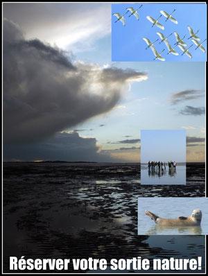 Réservation balade nature en baie de somme, traversée de la baie, sortie nature découverte des phoques , des oiseaux...