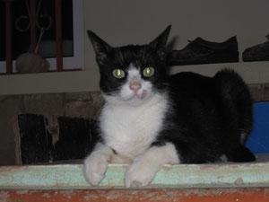 Trivido, das freche Katzentier