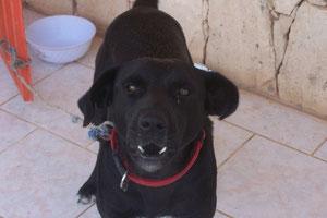 Schweini, unser Herzblatt, leider am 15.10.2012 gestorben.