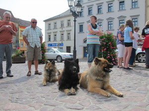 brave Hunde  beim Bürgermeisterempfang