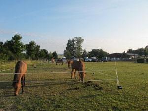 unser Camp am Reiterhof im Morgenlicht