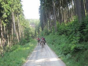 durch große Wälder