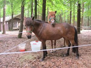 Mittagsrast im Wald (Schützenheim Rupprechtsaign)