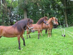 die Pferde fanden den komisch