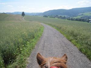 der Weg zwischen den Ohren meines Pferdes