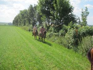 abgemähte Wiese: Erholung zwischendurch für die Pferdebeine