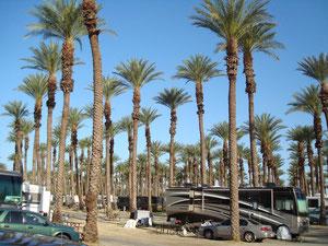 zijn Palmmen in de Spring