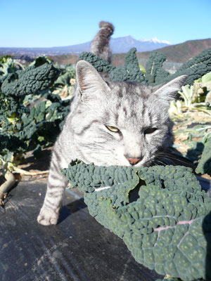 猫とカーボロ・ネロ