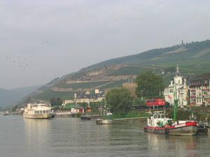 ライン川とぶどう畑