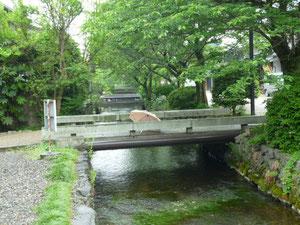 梅花藻とハリヨの地蔵川
