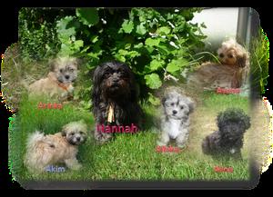 Hannah und ihre Fünflinge ...
