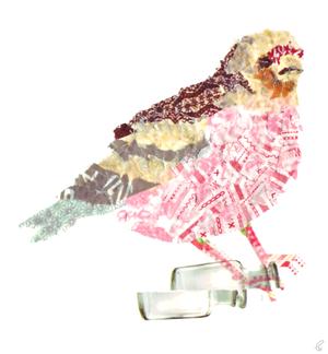 ベニマシコ/マスキングテープ 2012,1.26