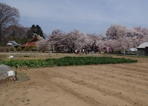 菜園と神代桜(右奥)