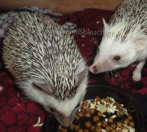 Hier: zwei Weibchen (Foto: Verena)