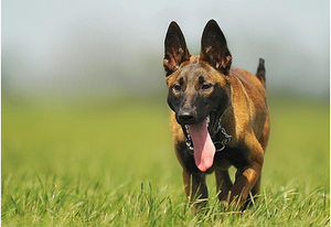 特に天気の良い日本の夏は犬にとって天敵となる