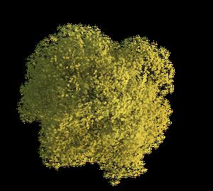 3ds Max Baum Textur im Frühling freigestellt für Visualisierungen und 3d Animationen im Architekurbereich