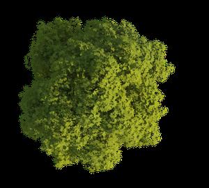 3D generierte Baum Textur im Sommer freigestellt für Visualisierungen und 3d Animationen