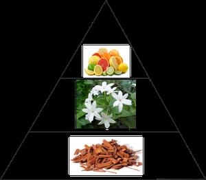 Ejemplo de pirámide olfativa