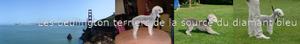 www.chiens-de-france.com/site_eleveur