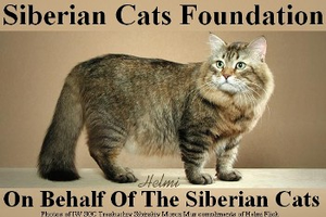 Siberian Cats Fundation
