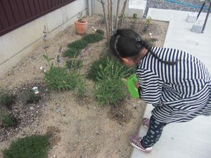 庭の草花にお水をあげてます