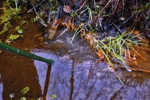 Sand u. Mikrofossilien fördernde Quelle