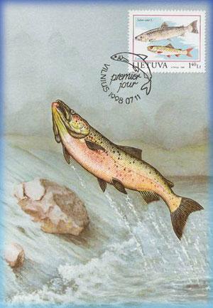 orthe saumon peyrehorade landes sorde l'abbaye baro navarrenx oloron aquitaine