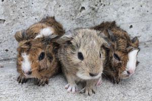 Mina, Mipp und Momo