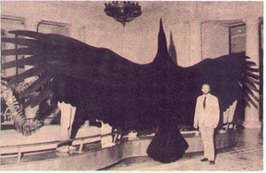 Silhouette d'Argentavis magnificens (Source Internet)