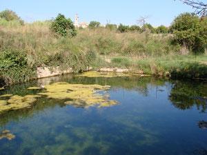 Bassa de la Fuente del Consuelo