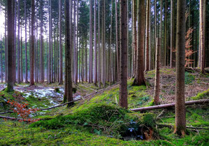 Keltenschanze im Laufzorner Holz (nur ca. 150m südlich verläuft die Römerstraße Via Julia)